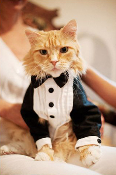 Cat in Tuxedo, from Ash Imagery