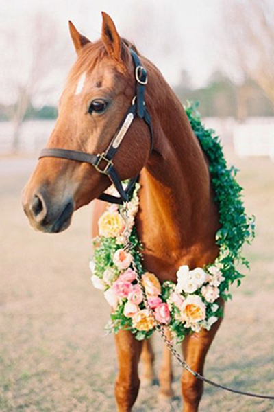 Horse With Floral Wreath, from www.drdelphinium.com