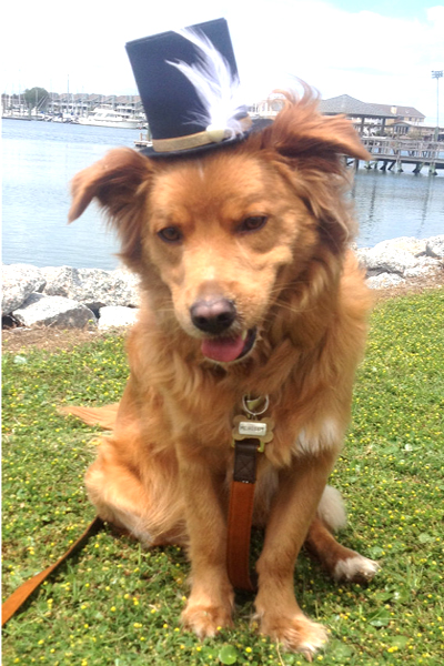 Dog Top Hat, from BrittsBackPorch on Etsy